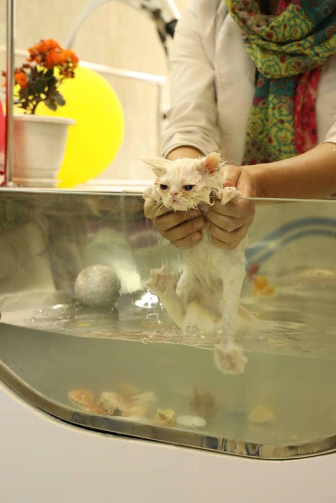 آموزش حمام گربه