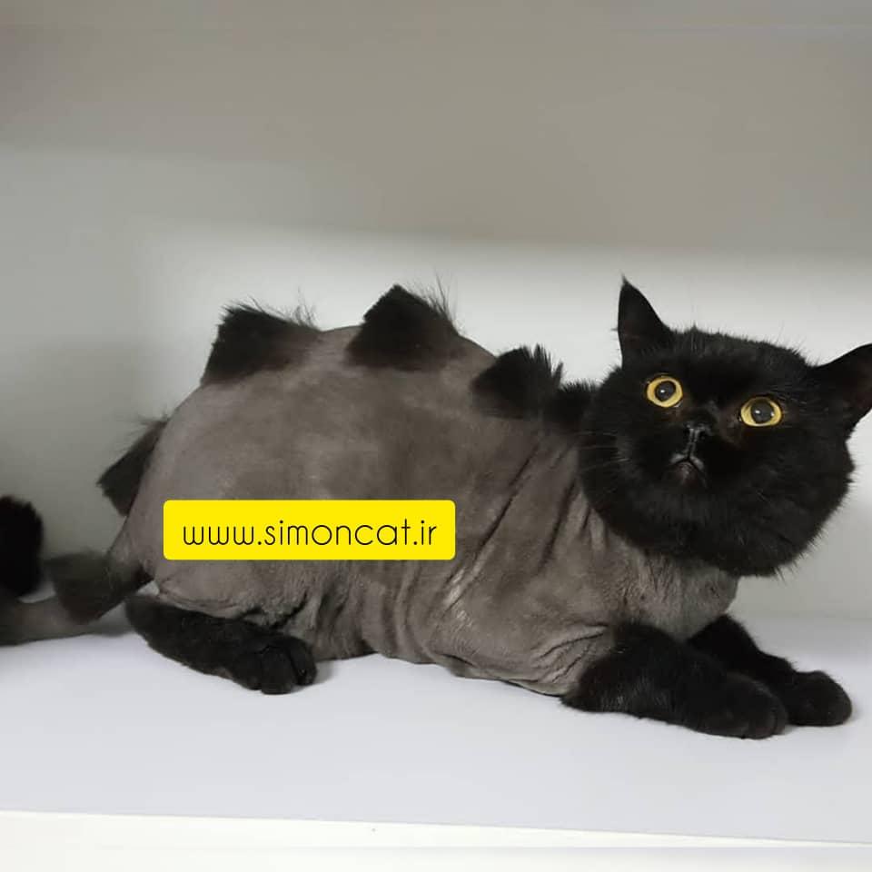 مدل مو گربه