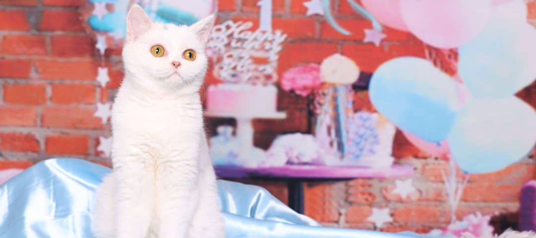 جشن تولد گربه